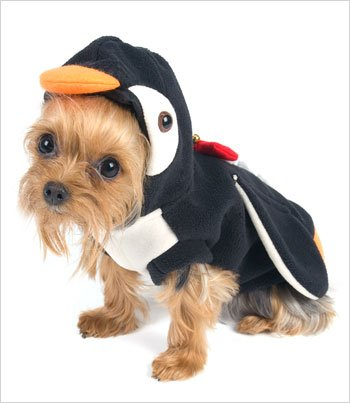 e441cd153 If you are looking for an Penguin Costume for Dogs Size 4 12 5 l x 16 18 5  g - . Take a look here you will find reasonable prices and many special  offers.
