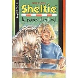 Sheltie, le poney Shetland