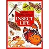 img - for Insect Life (Usborne Mysteries & Marvels) book / textbook / text book