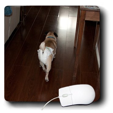 Mp_49476_1 Jos Fauxtographee Realistic - Pet Pug Doggie Walking Away Wearing Its Baby Diaper On Hard Wood Floors - Mouse Pads front-272484