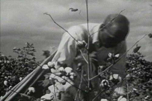 classic-cotton-films-dvd-1920s-1950s-cotton-industry-mill-gin-plant-farming-plantation-fields-picker