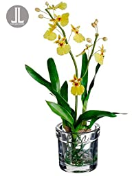 Silk Plants Direct Oncidium Orchid Plant (Pack of 4)