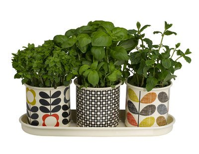 Orla Kiely Set of 3 Herb Pots on a Tray in Flower Stem Design by Wild and Wolf