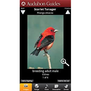 Audubon Birds: A Field Guide to North American Birds