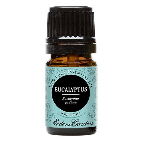 Eucalyptus Radiata 100% Pure Therapeutic Grade Essential Oil by Edens Garden- 5 ml