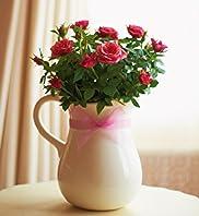 Planted Rose Jug