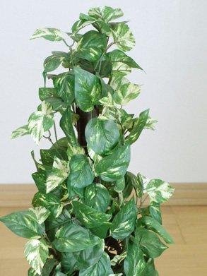 光触媒 観葉植物 ポトス 75cm