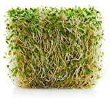 Certified Organic Alfalfa Sprout Seeds -1 Lb- Seeds For: Salad Sprouts & Sprouting - Can Be Grown in Any Sprouter