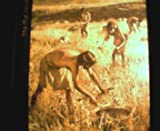 img - for The First Farmers book / textbook / text book