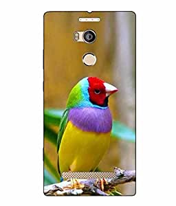 Snazzy Bird Printed Colorful Hard Back Cover For Gionee Elife E8