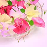 10ml Sweet Pea Fragrance Oil - Candle Making - Home Fragrancing
