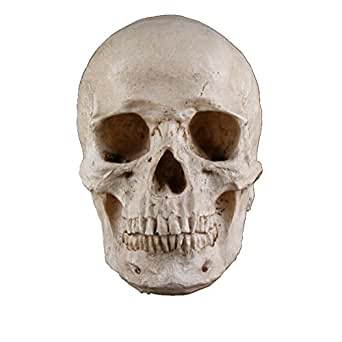 Halloween Horror Skull Head Collectible Skeleton Decoration Figurine Model