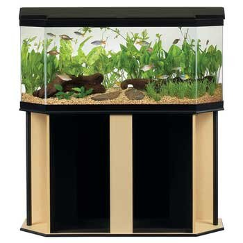 Fish Tanks With Stands I Didnu0027t Like This Stand