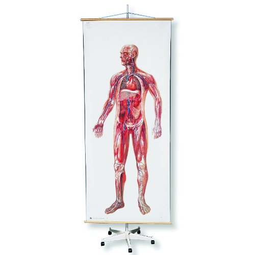 3B Scientific Q99 Special Mobile Rolling Chart Stand