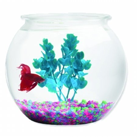 2 Gallon, Round Plastic Bowl Fish Tank (2 Gallon Plastic Fish Bowl compare prices)