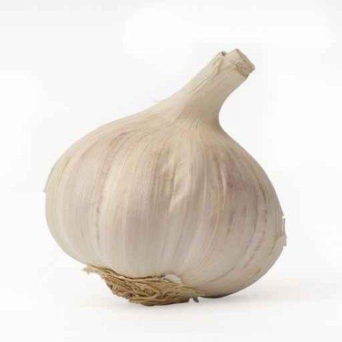 Garlic - 48