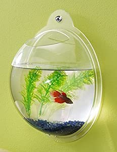 Wall Mount Hanging Beta Fish Bubble Aquarium Bowl Tank by KAZE HOME