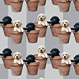Labrador Puppies Potted Pups Gift Wrap & Tags (2+2)