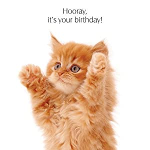 "Amazon.com - Ginger Kitten ""Big Hug!"" Birthday Card"