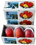 マンゴーファーム宮古島 宮古島産 アーウィン種 完熟マンゴー 「化粧箱入り」 1kgパック(約2~3玉) お中元のし付き ランキングお取り寄せ