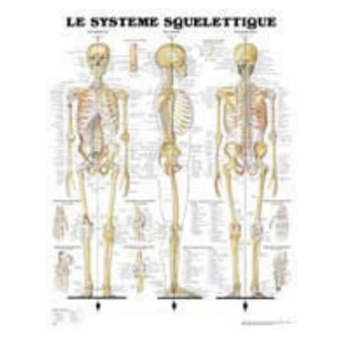 Le Systeme Squelettique: Anatomical Chart Company