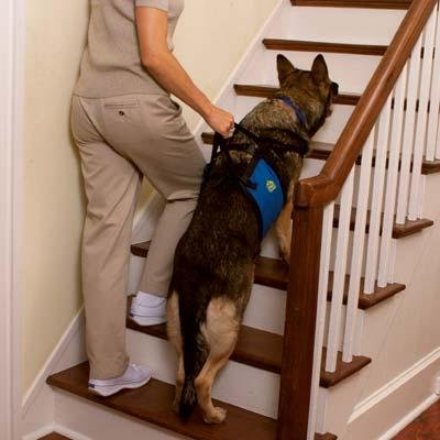our-pets-lift-n-aid-mobility-harness-medium