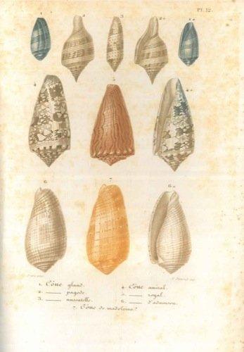 conchyliologie-leaons-aclacmentaires-sur-lhistoire-naturelle-des-animaux-praccedaces-dun-aperau-gacn