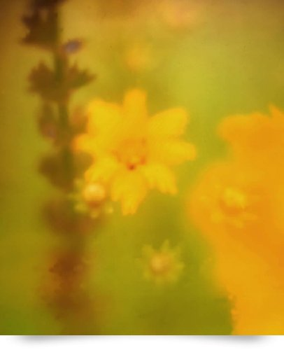 Liatris And Yellow Flower Dreamy Photo (Giclee Art Print), John Nanian front-976013