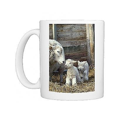 Photo Mug Of Sheep A Lambs From Ardea Wildlife Pets front-1069854