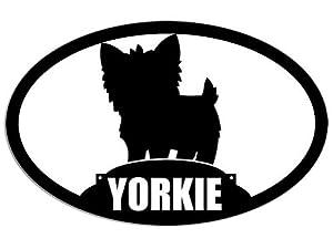Yorkie Poo Puppies   Car Interior Design