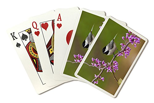 Black-Capped Chickadee (Playing Card Deck - 52 Card Poker Size with Jokers)