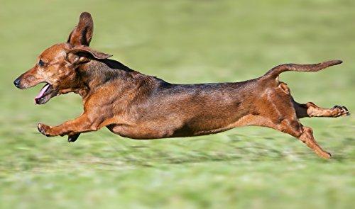 """WIENER """"Bassotto tedesco"""", motivo: bassotto Tappetino per Mouse, alta qualità, con animali/Tappetino per Mouse con immagine di cani, Made in Germany"""