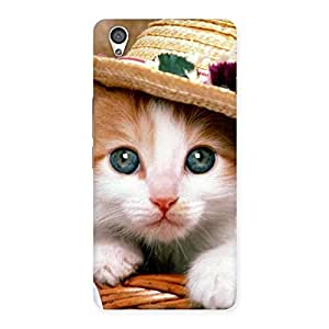 Special Premium Cute Hats Cat Multicolor Back Case Cover for OnePlus X