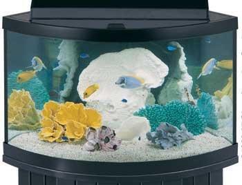 Aqueon Standard Tank Sizes 25 Gallon Aquarium Dimensions