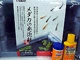 メダカの発砲鉢で飼う黒メダカ(日本メダカ)7匹が付いたフルセット【こだわりの生体をお届けします 名生園】