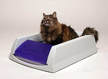 odorless Litter Box