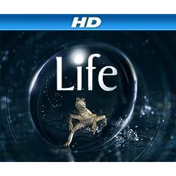 Life Season 1 [HD]