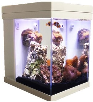 Jbj Mini Cubey Deluxe Led Series 3 Gallon Aquarium