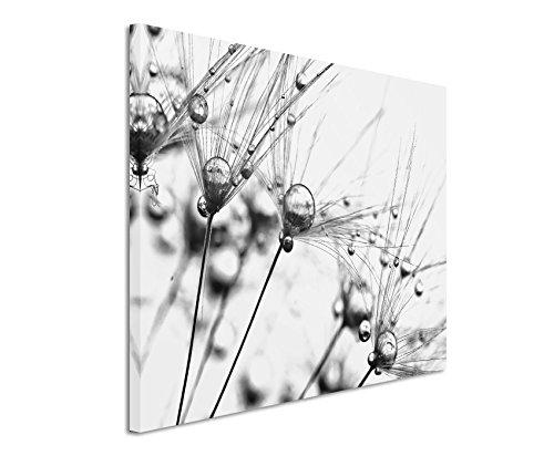 50x70cm Leinwandbild schwarz weiß in Topqualität Makroaufnahme Samen mit Wassertropfen II