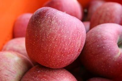 【予約商品:11月下旬頃~出荷】糖度13度以上・長野県産りんご サンふじ 家庭用10kg(24玉~40玉) (小キズ・色ムラ・割れなど)