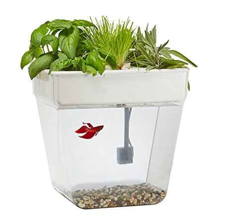 Back to the roots water garden fish tank container garden club - Water garden containers for sale ...