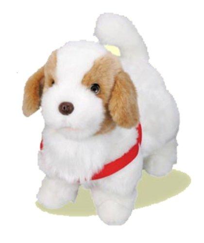 葵「はい、お誕生日プレゼントの愛犬てつよ」(fate)