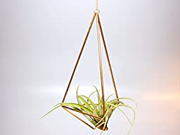 Design 22 - Large Hanging Brass Geometric Ornament (Himmeli) - Air Plant, Terrarium, Hanging Planter