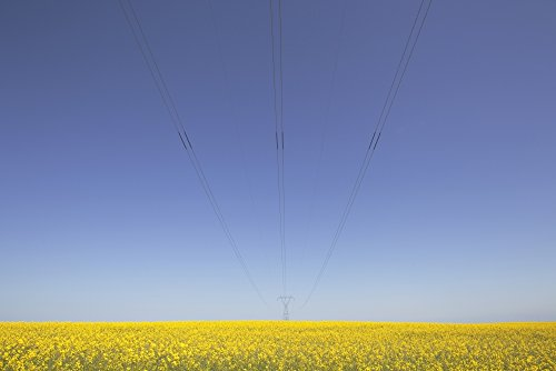 ron-bouwhuis-design-pics-canola-field-and-power-lines-east-of-nanton-alberta-canada-photo-print-4572