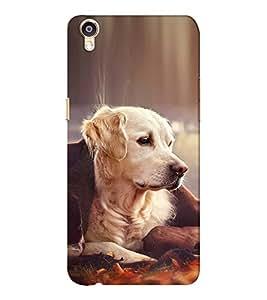 EPICCASE Innocent dog Mobile Back Case Cover For Oppo F1 Plus (Designer Case)
