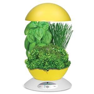Miracle gro aerogarden 3 pod indoor garden with gourmet for Indoor gardening amazon