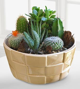 Garden Design Garden Design with Indoor Cactus Garden Ideas