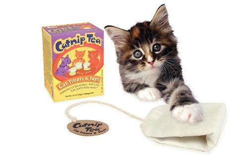 Pet Buddies Catnip Tea Cat Treat / Toy