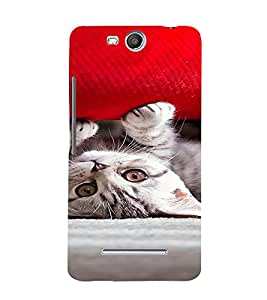 PrintVisa Cute Kitty Design 3D Hard Polycarbonate Designer Back Case Cover for Micromax Canvas Juice3 Q392