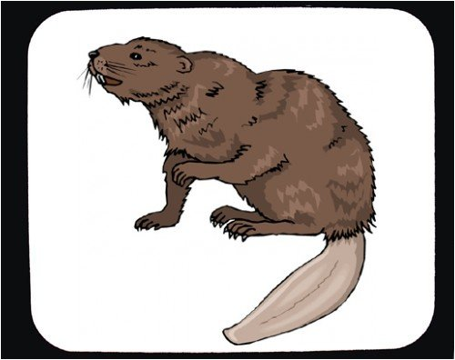 Mouse Pad with animal, beaver - Buy Mouse Pad with animal, beaver - Purchase Mouse Pad with animal, beaver (SHOPZEUS, Office Products, Categories, Office Supplies, Desk Accessories)